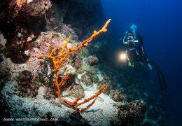 Corals at Srakane Wall